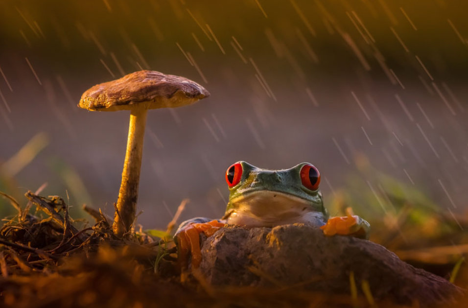41 Of The Coolest Frogs And Toads In The  100802 PM.jpg