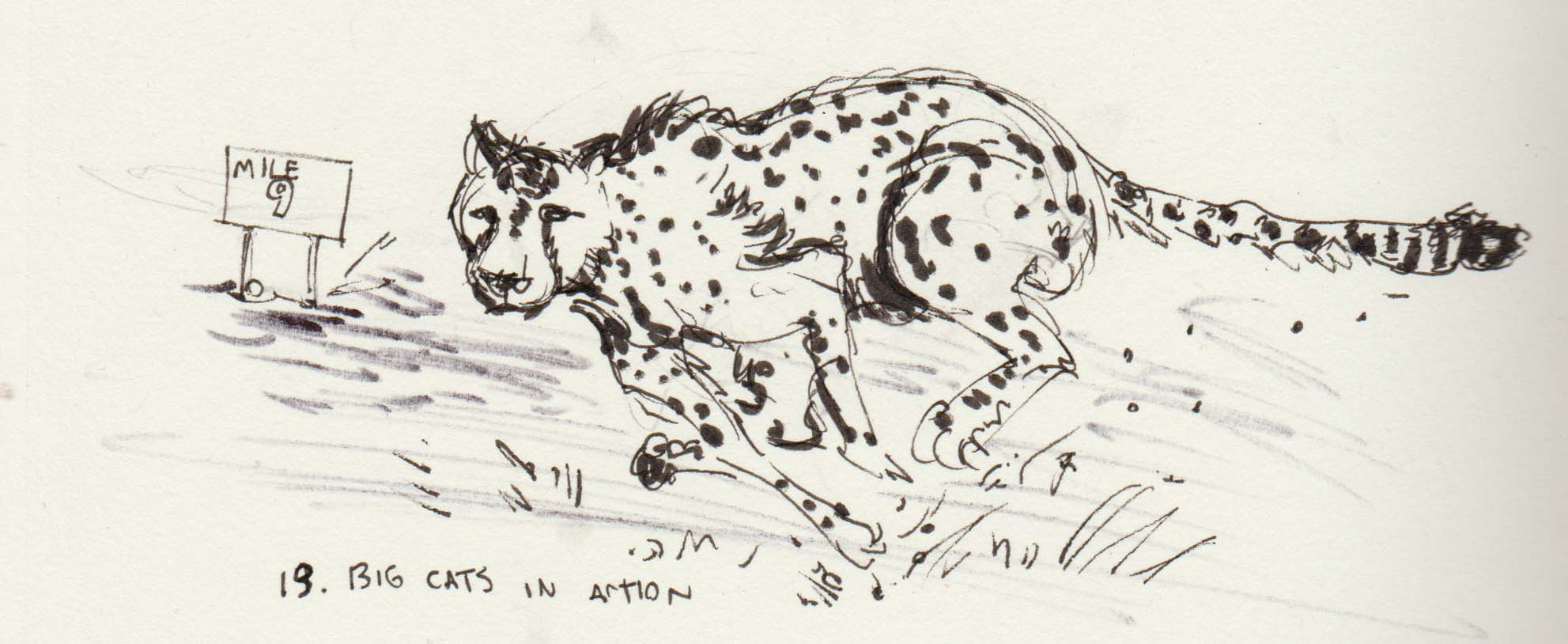 Inktober Day 13 Big Cats in Action.jpg