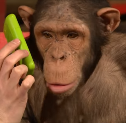 monkey phone.png