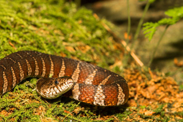photos of snakes - Google Search — 123200 PM.jpg