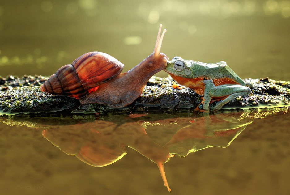 Snails and frogs kissing by Ed.jpg